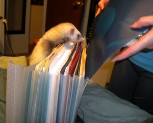 ferret in the files