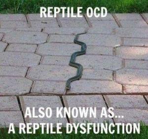 OCD reptile dysfunction