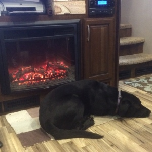 RV fireplace and dog
