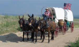 covered wagon mule team Rinker Buck