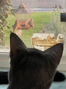 cat birdfeeder